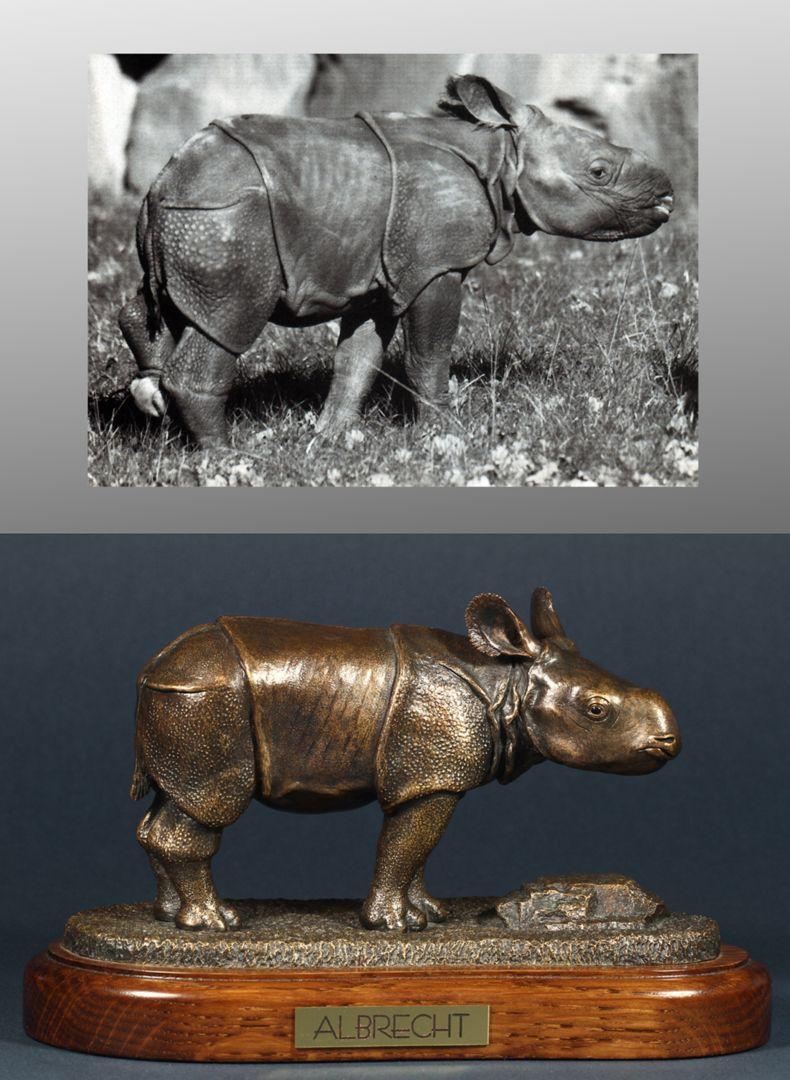 Albrecht Picture comparison, photo above: ALBRECHT, Manati, 15. Jhg. H. 1, April 2000, p. 4, photo Dr. Lorenzo von Fersen (Nuremberg Zoo)
