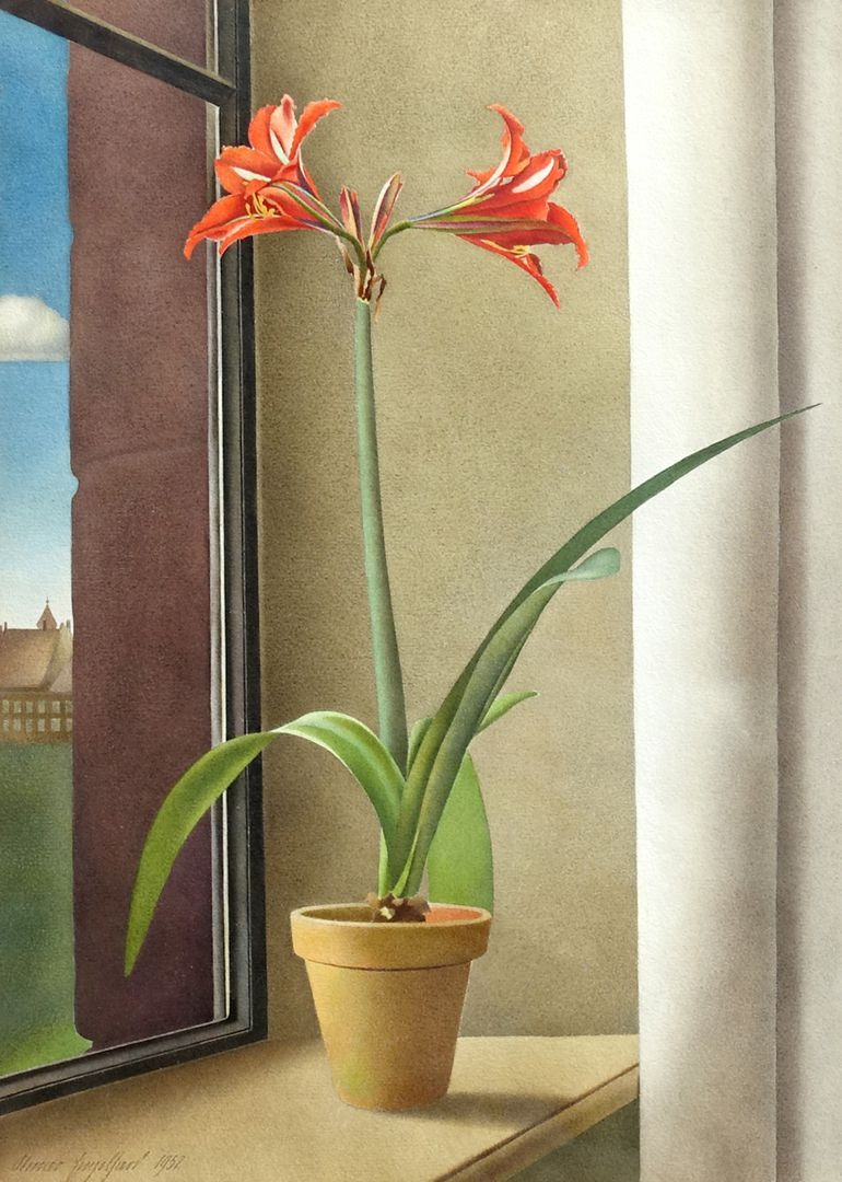 Flower still life, amaryllis General view