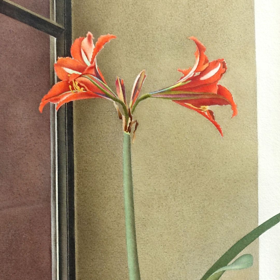 Flower still life, amaryllis Detail with blossoms