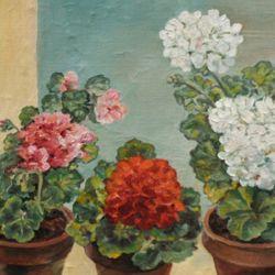 Geraniums against white cloud