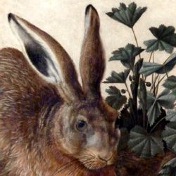 The hare (Rome)
