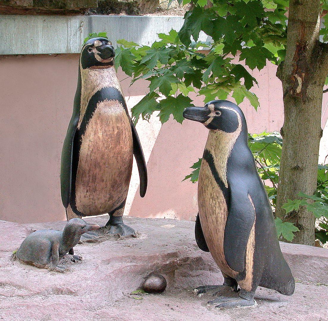 Humboldt penguin family