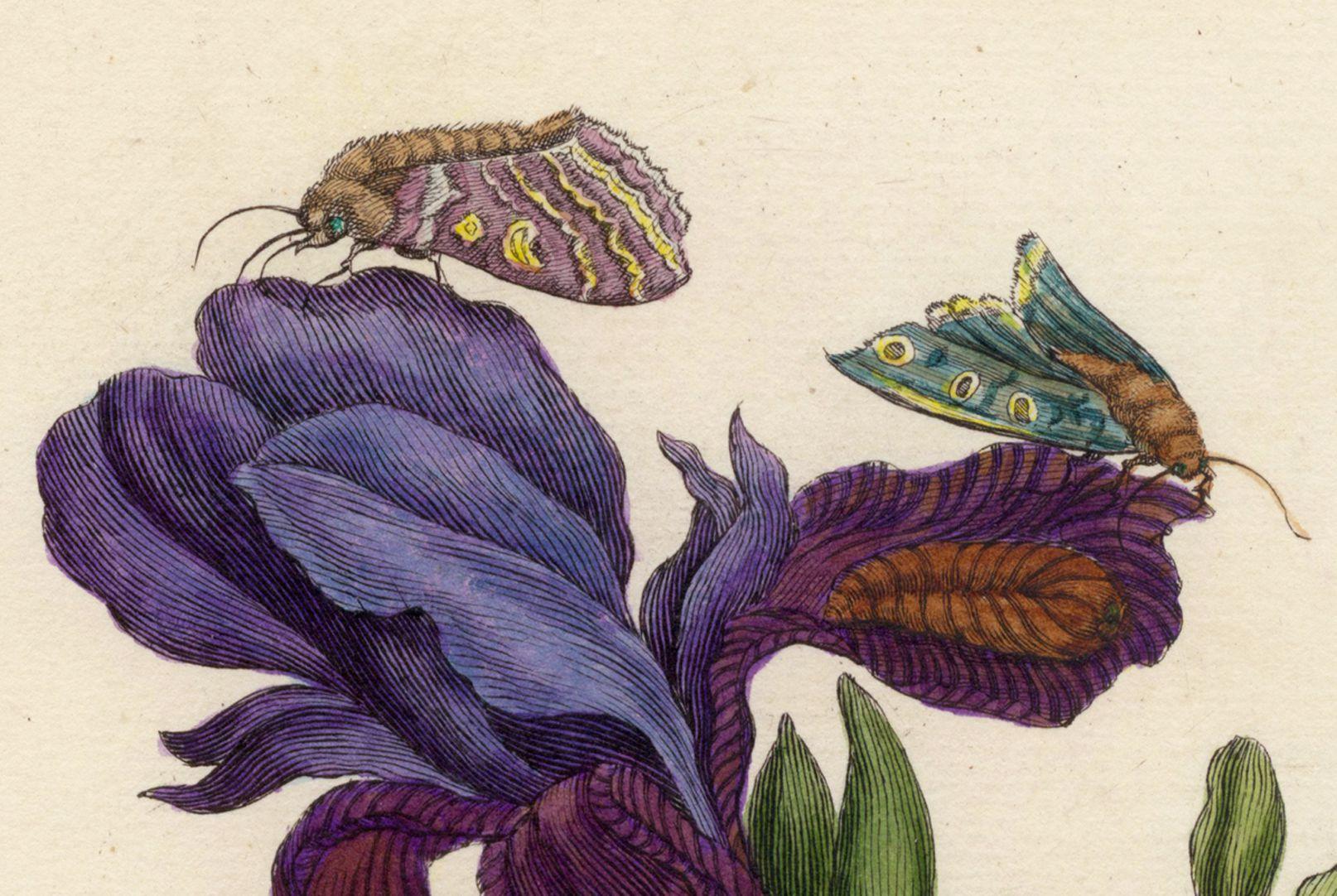 Iris Upper half of the sheet, detail