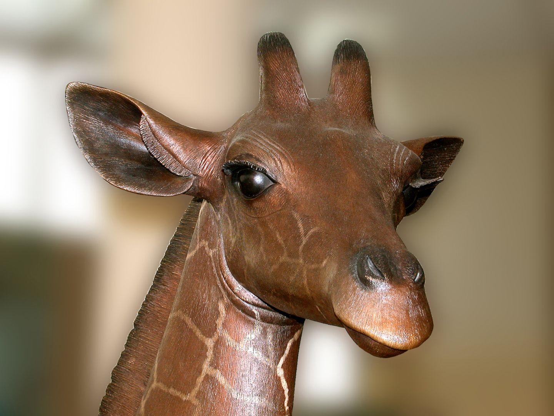 Reticulated giraffe Head,oblique view