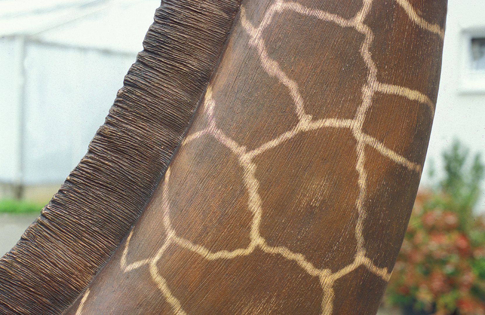 Reticulated giraffe Neck, detail