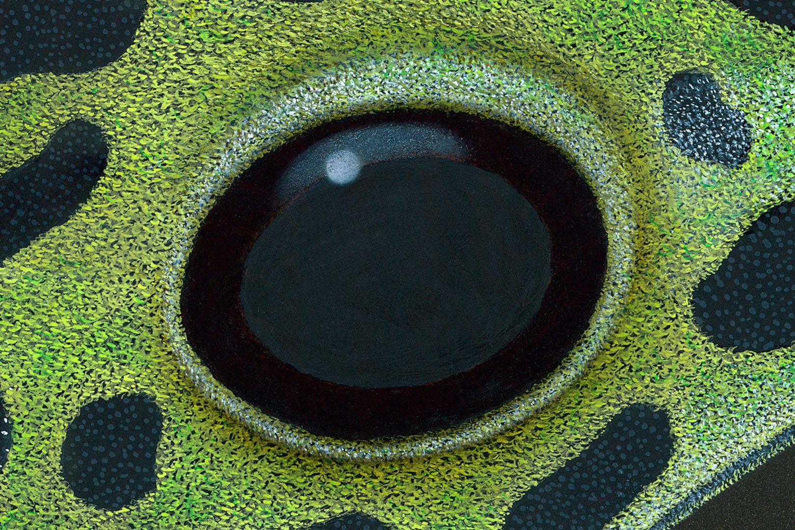 Poison dart frog Eye