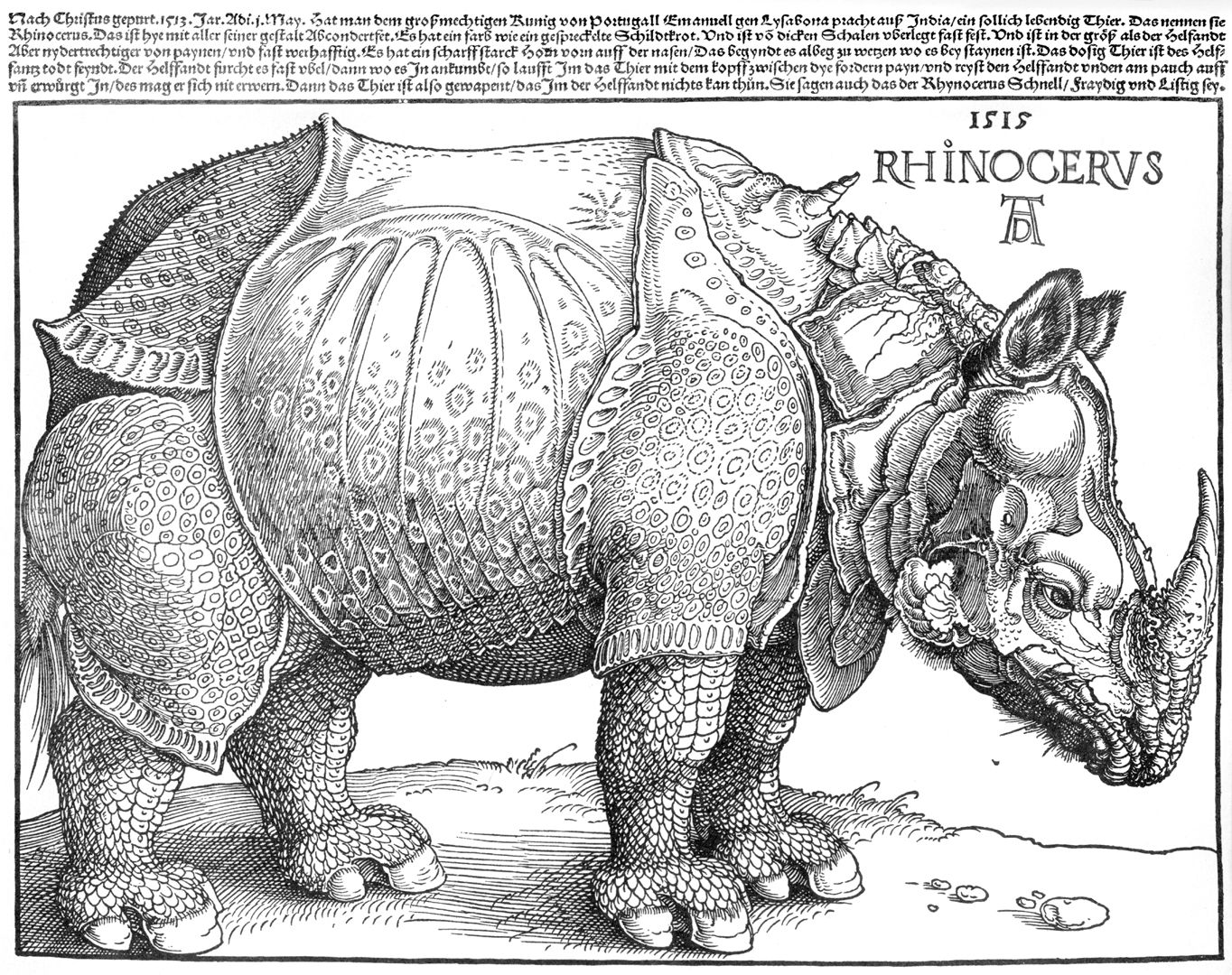 Rhinoceros Total sheet
