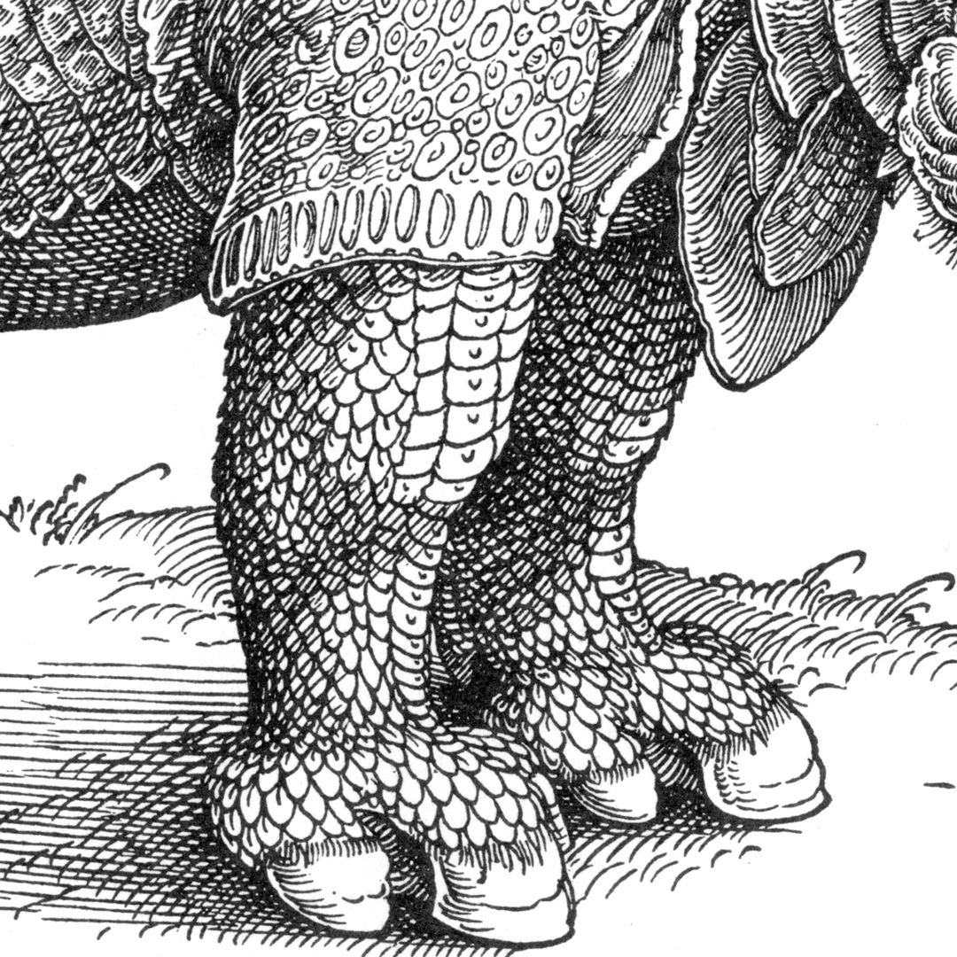 Rhinoceros Forelegs