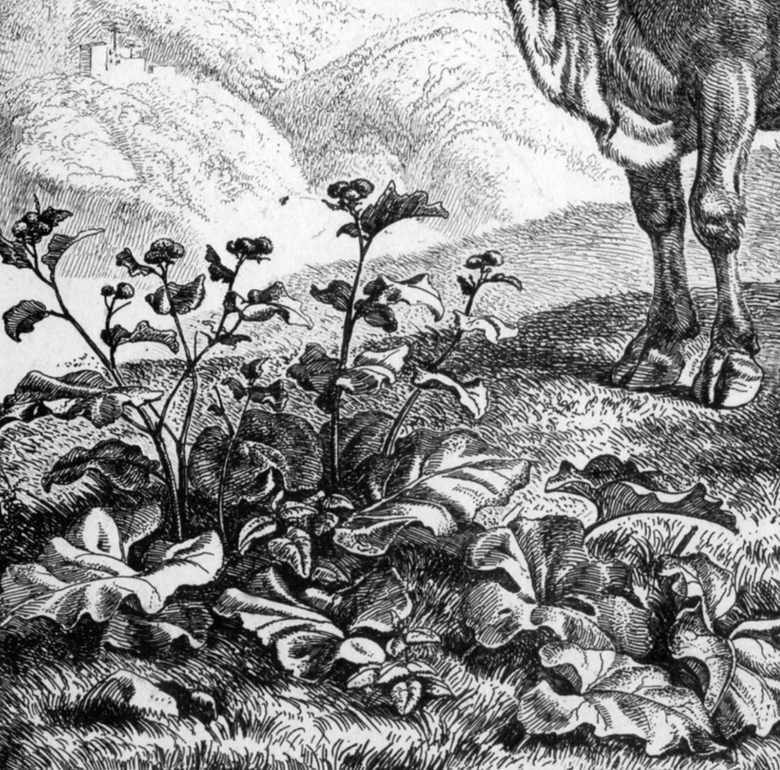 Cattle near ruins Detail with plants