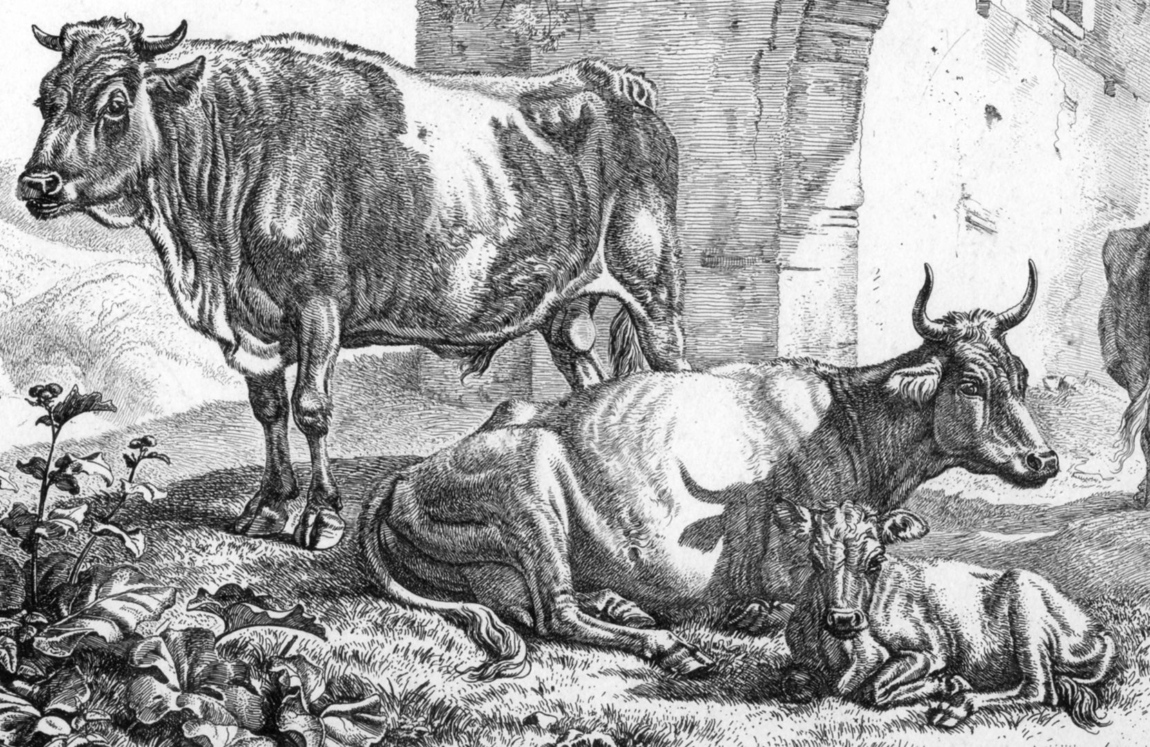 Cattle near ruins Central section of the picture
