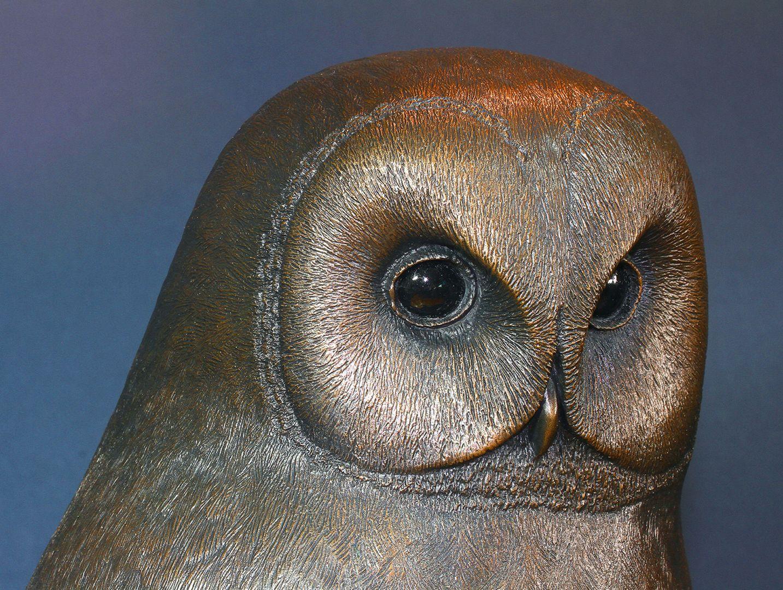 Tawny owl o