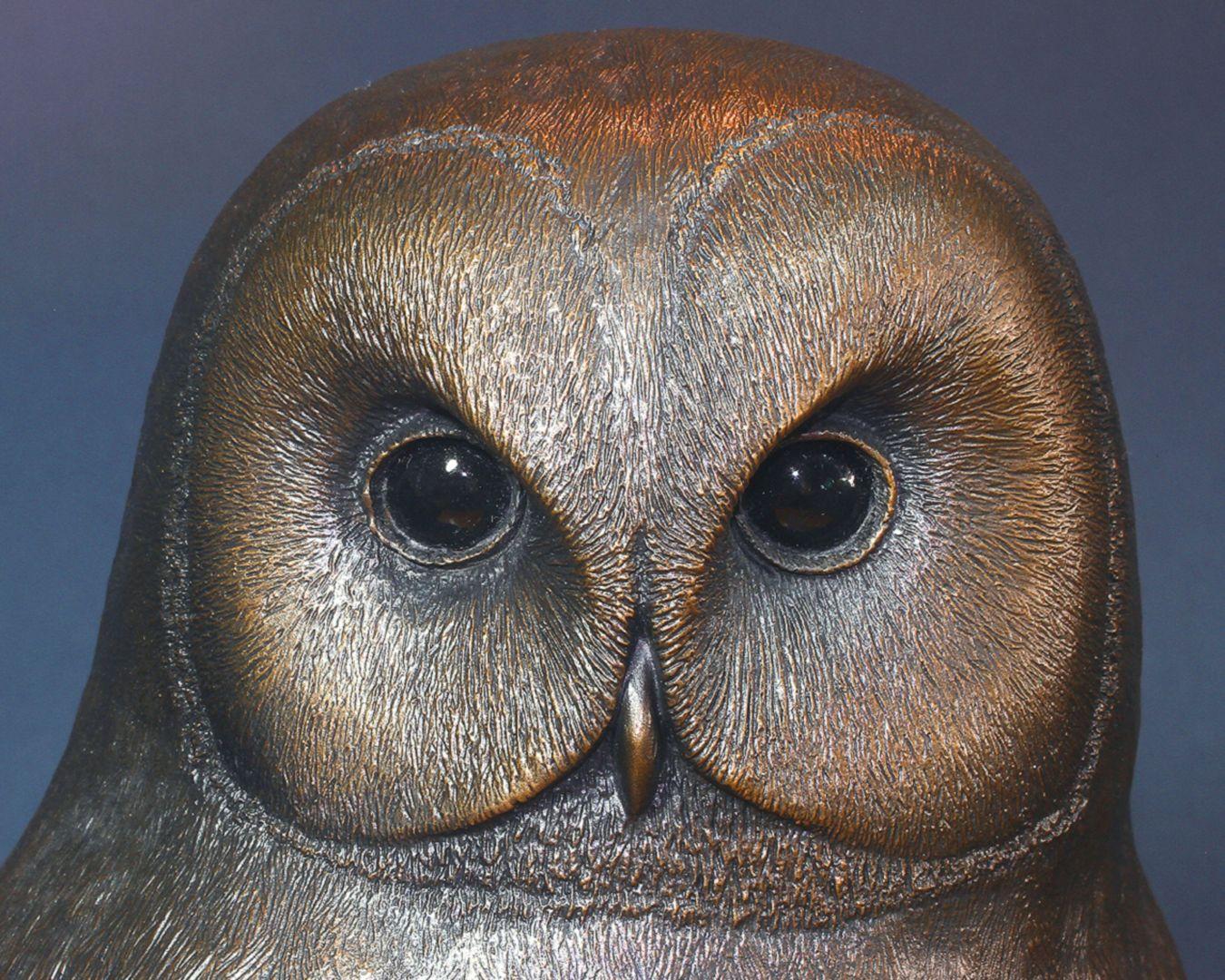 Tawny owl Face