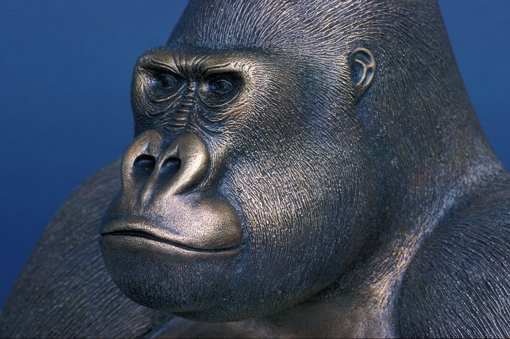 Western lowland gorilla Head, detail